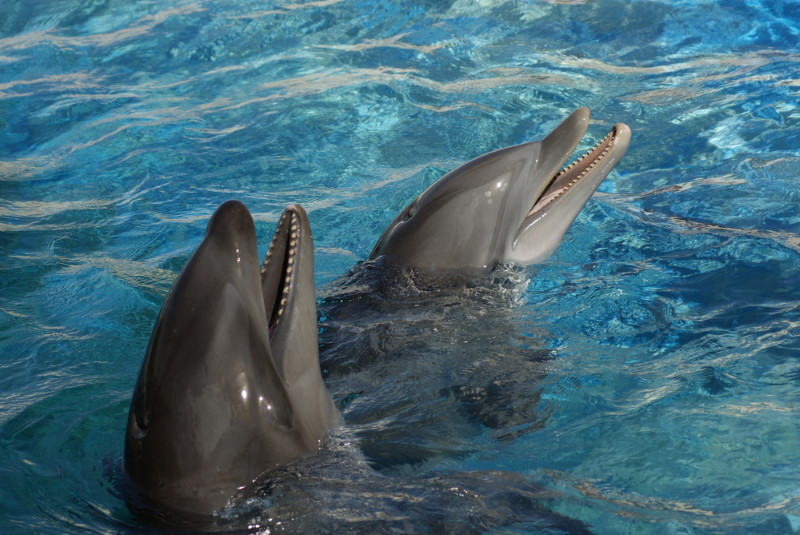 Wholphins