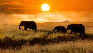 Serengeti National