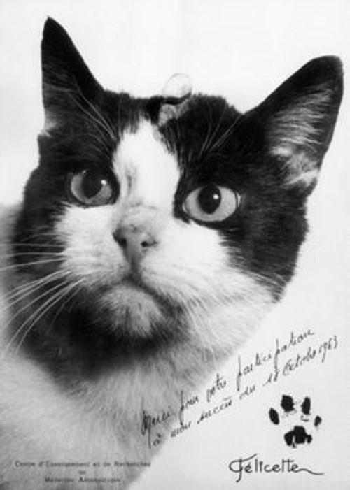Félicette the cat