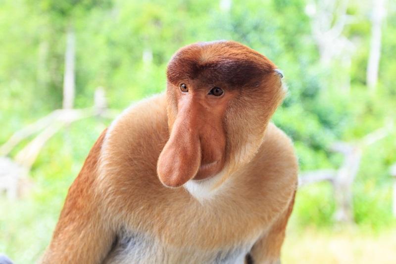 Weird Monkey Pictures 5