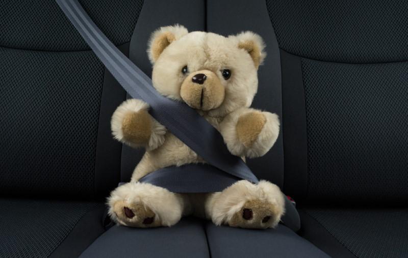 Safe Bear Transit in Missouri