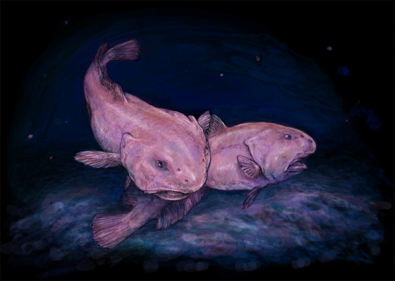 blobfish painting