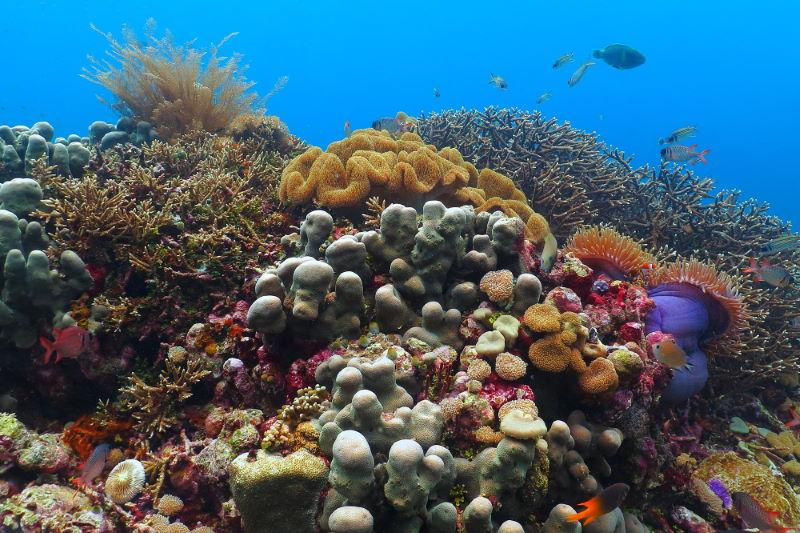 Apo-Reef-2