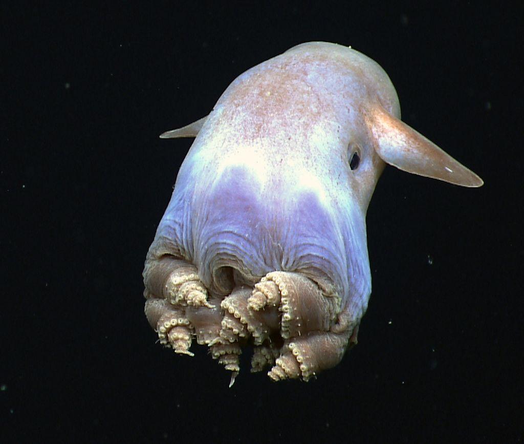 Dombo-octopus (1)