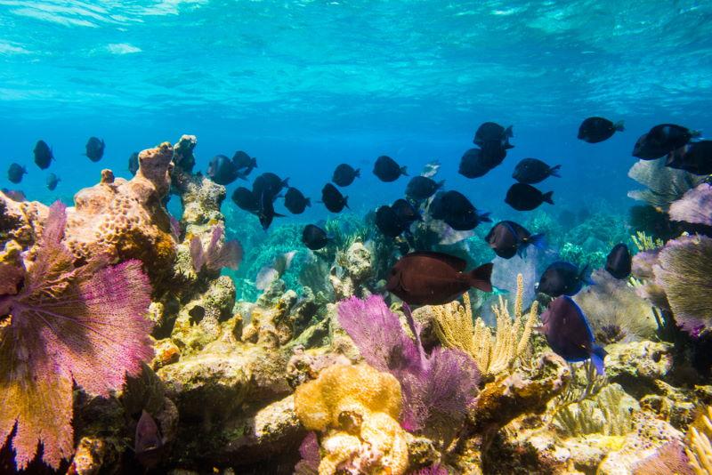 Mesoamerican-Barrier-Reef-System